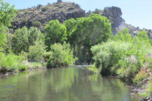 Mogollon Creek