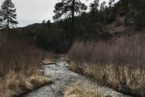 East Fork Gila River