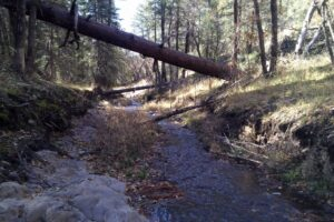 East Fork of the Mimbres River